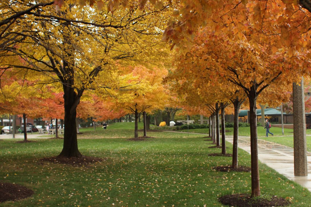 Row of on-campus trees in the fall